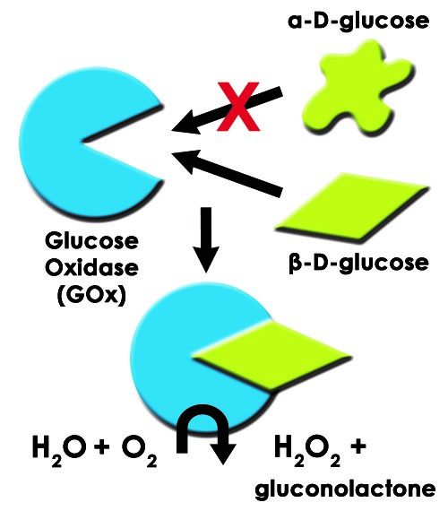 Glucose Oxidase Diagram with ß-D-Glucose and H2O2