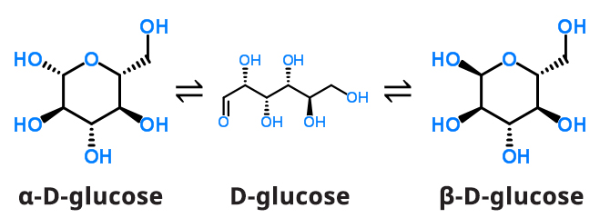 Mutarotation equilibrium of D-glucose